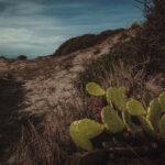 pianta di fichi su un spiaggia
